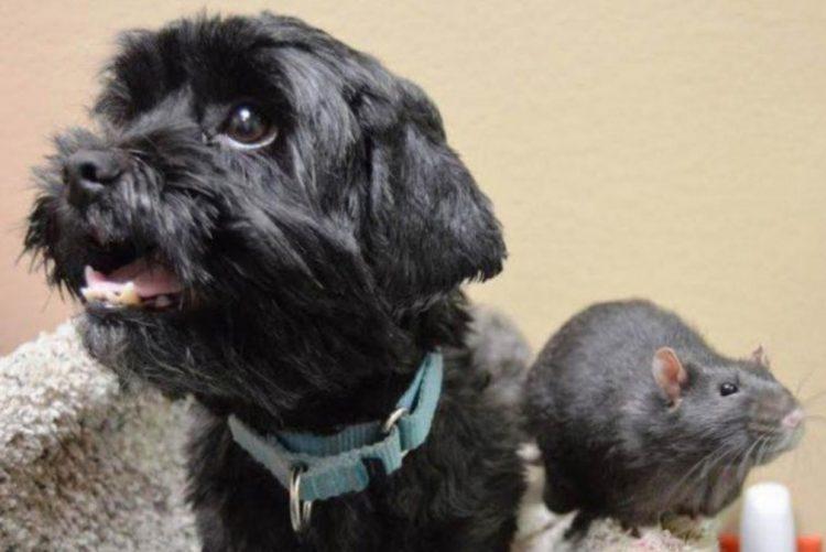 Cão, gato e rato entregues em abrigo recusam-se a serem separados