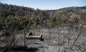 Centro recusou apoio a 37% das casas destruídas em outubro de 2017