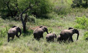 Banco Mundial dá 45 milhões de dólares para ajudar áreas de conservação em Moçambique
