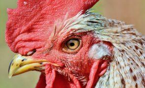 PSP apreendeu mais de 150 aves no Porto