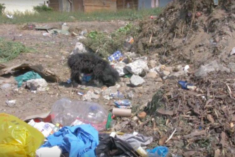 Família abandona cão 'velho' no lixo depois de adotar cãozinho bebé [vídeo]