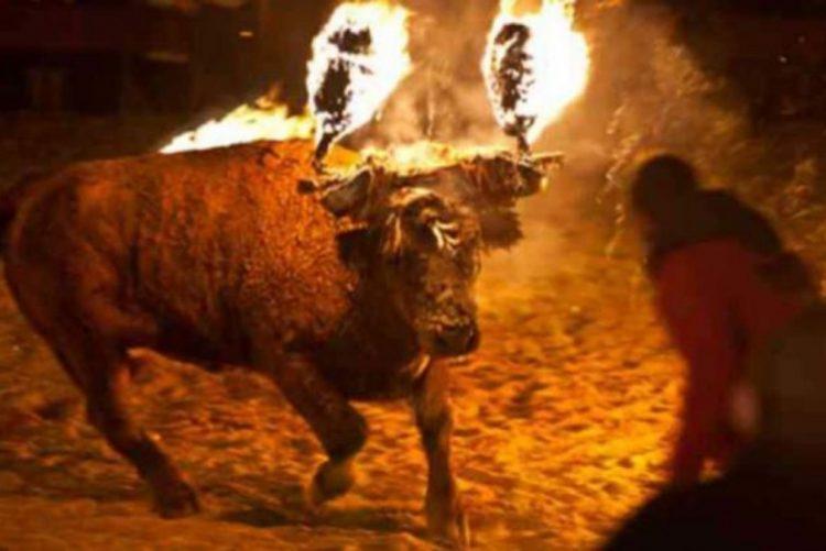 Petição quer acabar com festival de touros com os cornos em chamas