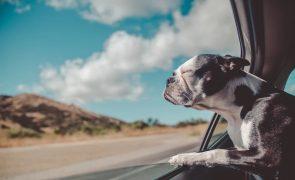 #16 | Melhore a sua vida: Descubra a técnica que acaba com qualquer enjoo no carro