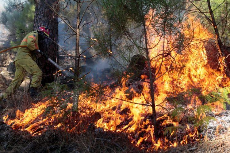 61 concelhos sem plano de defesa da floresta contra incêndios em vigor