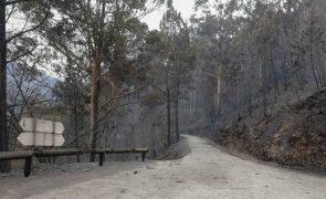 Cerca de 70% da Mata Nacional da Margaraça recuperou dos fogos de outubro