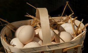 Estes «são os melhores ovos de Portugal»