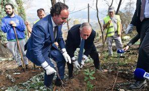 Marcelo arranca eucaliptos e pede para seguirem o seu exemplo