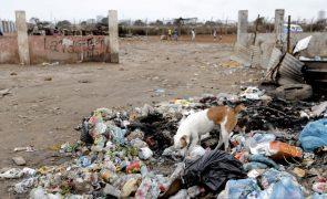 Raiva matou 36 pessoas este ano na província angolana do Bié