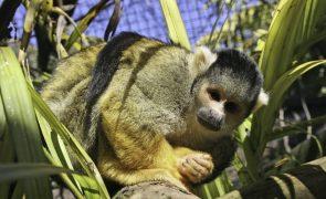 Brasil aumentou em mais de 94 milhões os hectares de áreas ambientais protegidas
