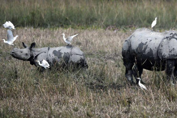 Vida selvagem sofreu declínio de 60% em pouco mais de 40 anos por culpa do homem