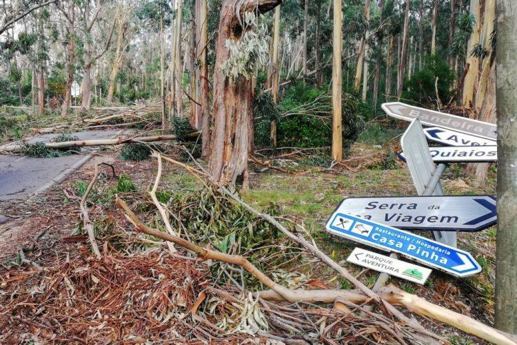 Tempestade Leslie causou 38 M€ de prejuízos na Figueira da Foz