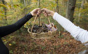 Investigadores de Coimbra descobrem vantagens de cogumelo para prevenir problemas de memória