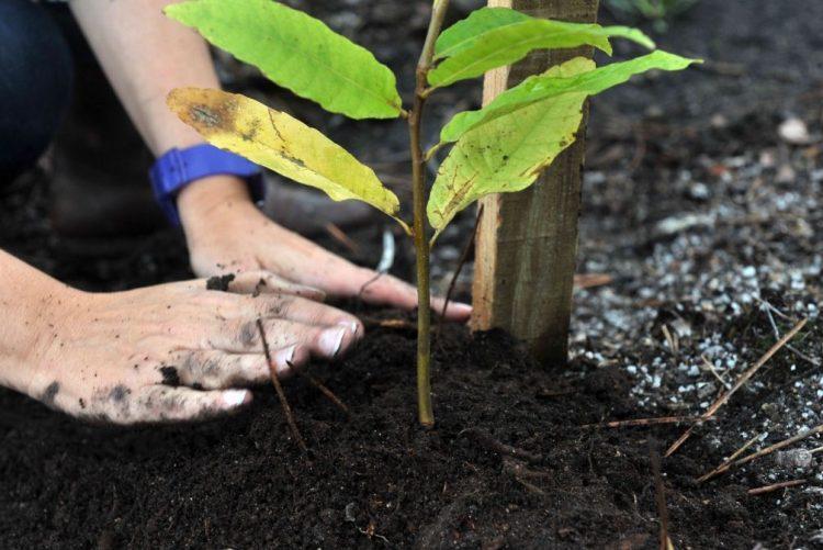 Voluntários vão plantar 3.000 árvores em aldeia de Arganil