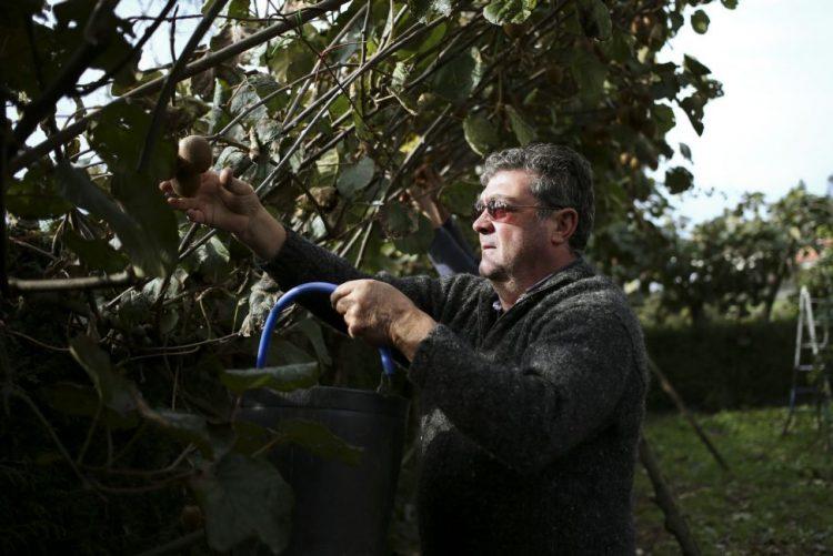 Agricultor oferece em vários locais da Feira duas toneladas de kiwis