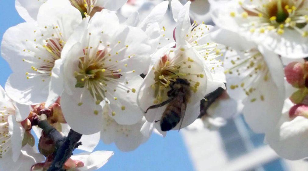 Alerta: Tem alergias? Nível de pólen no ar aumenta nos próximos dias