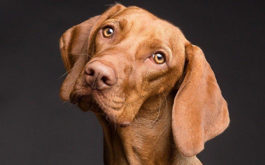 Ter cão em casa? O coração agradece
