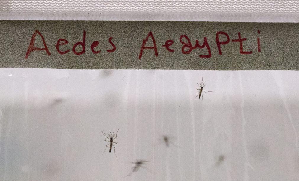 América Latina em alerta depois de registar dois milhões de casos de dengue