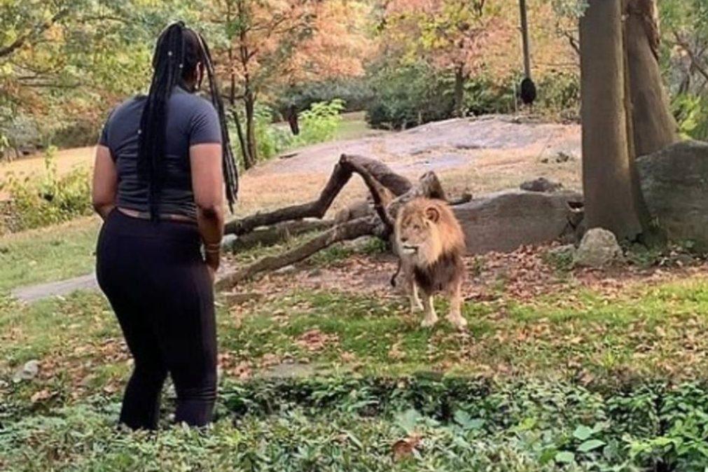 Jardim zoológico palco de ato de loucura de mulher que enfrentou leões [vídeo]