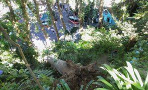 Caiu árvore no local onde em 2017 ocorreram 13 mortes no Funchal
