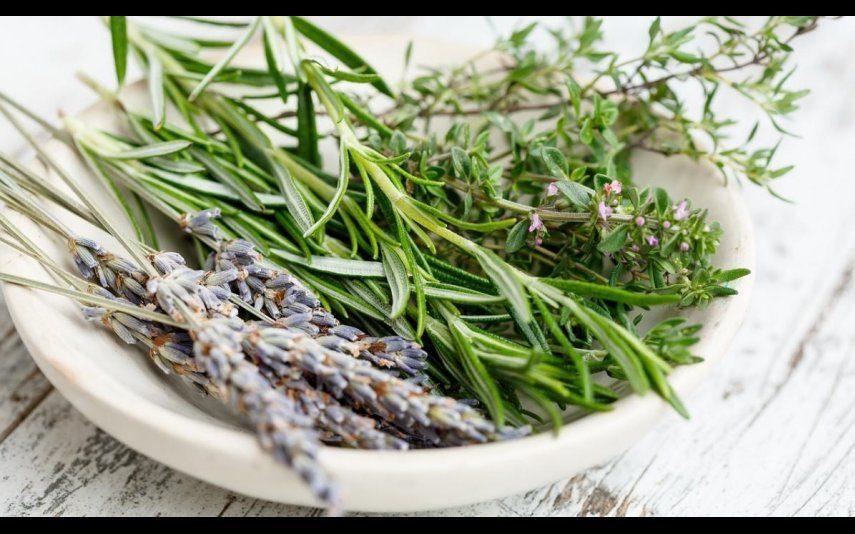 Saúde 7 plantas cujos benefícios para a saúde (muito provavelmente) desconhecia