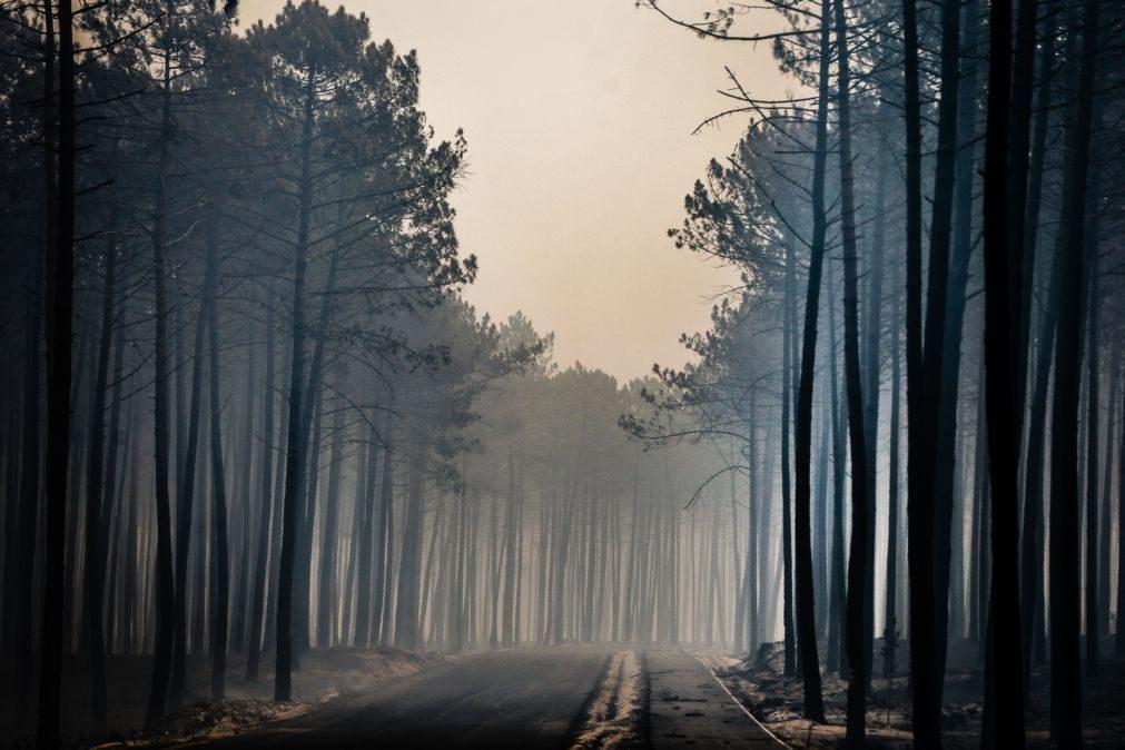 Incêndio no Pinhal de Leiria em outubro de 2017 terá resultado de dois reacendimentos