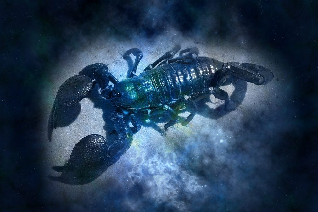 Horóscopo 2020 | O que reservam os astros para o signo Escorpião