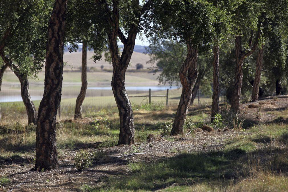 Agricultores defendem a criação de um estatuto da agricultura familiar