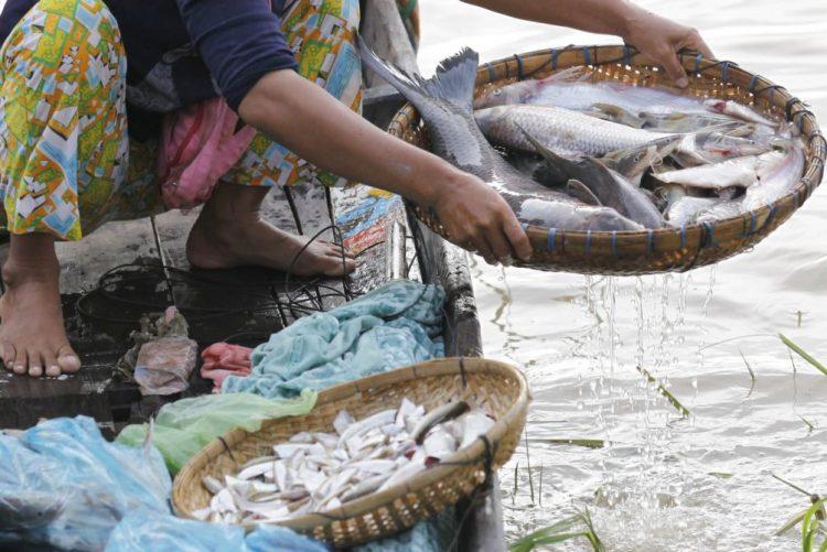 Empresa de transformação de peixe despede 300 trabalhadores em Cabo Verde