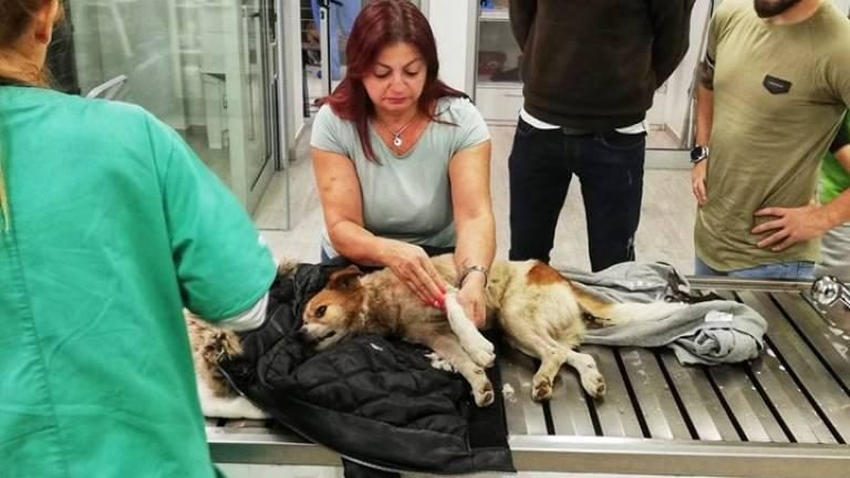 Madeira. Associação resgata cão com múltiplas fracturas atirado para ribeira