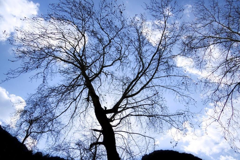 Meteorologia: Previsão do tempo para terça-feira, 4 de fevereiro