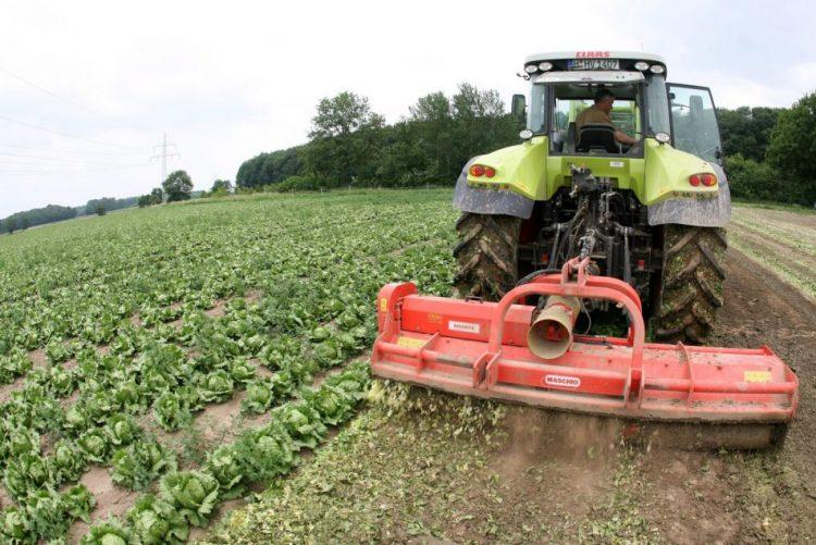 Agricultores recebem sexta-feira 463,2 milhões de euros de apoios