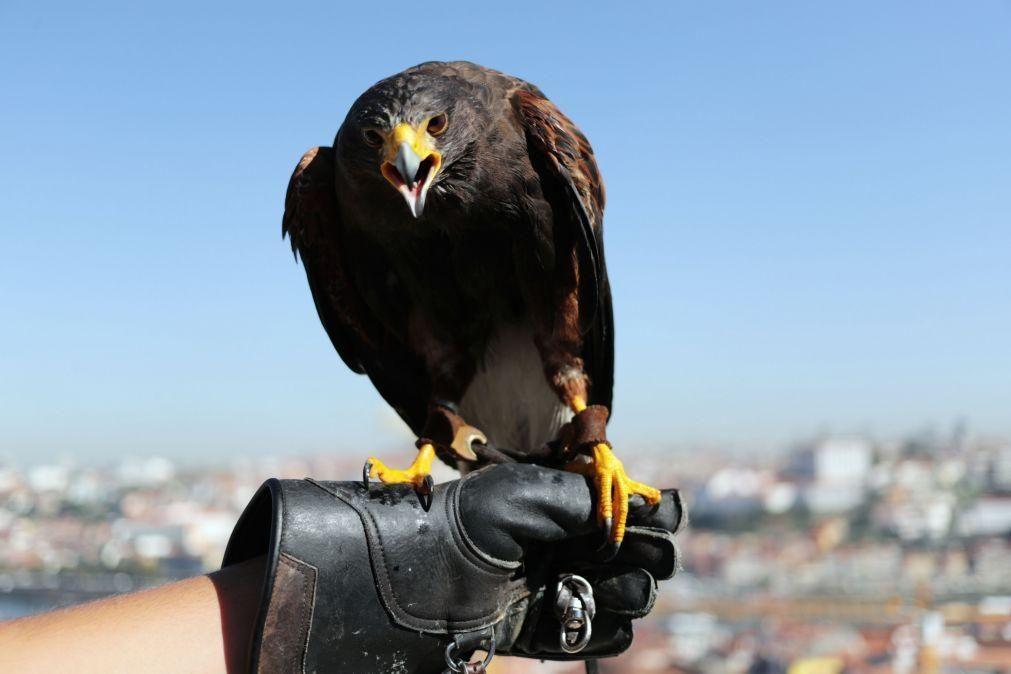 Onze águias-imperiais foram mortas por suspeita de envenenamento em Portugal