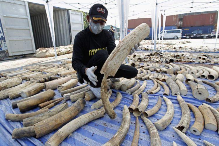China vai proibir comércio de marfim até final de 2017