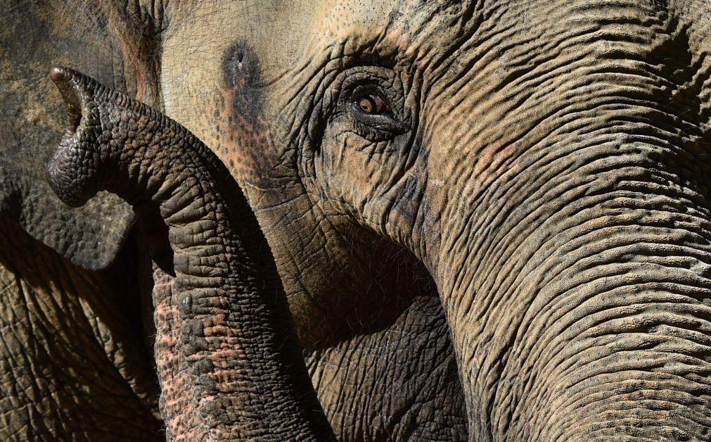 Caçador angolano morto por um elefante na província do Zaire