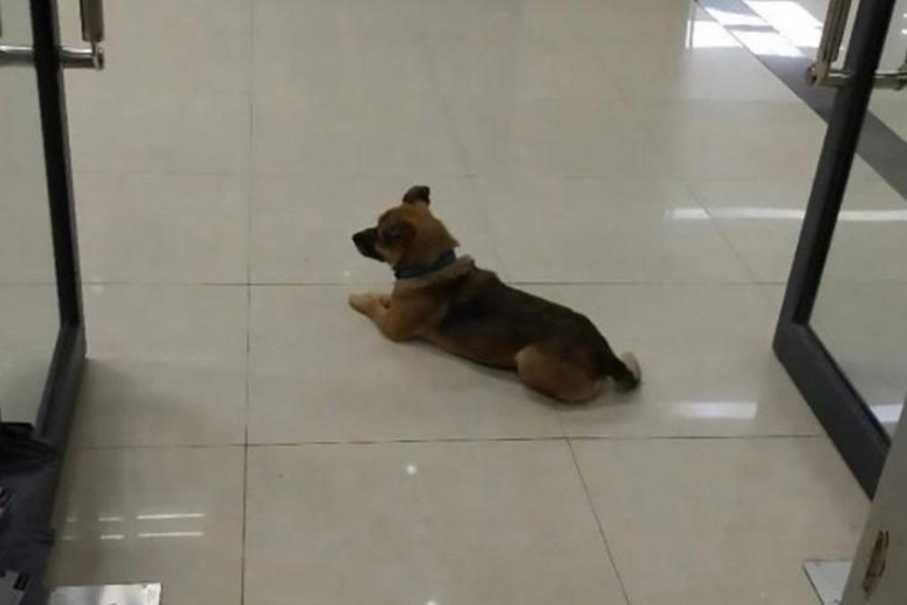 Cão espera em hospital pelo dono que morreu há três meses de covid-19