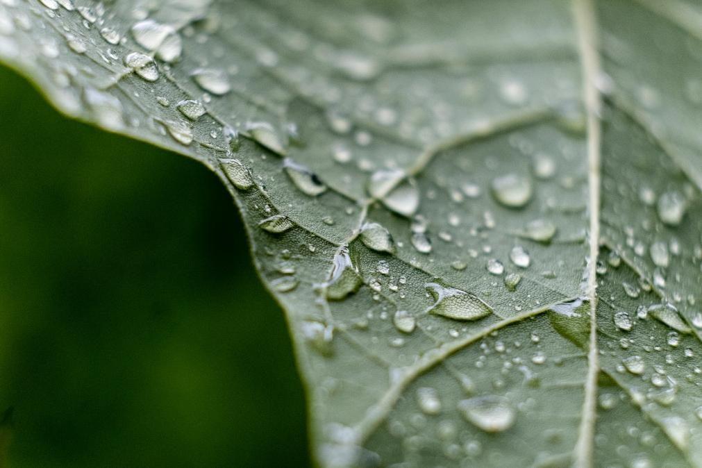 Meteorologia: Previsão do tempo para domingo, 19 de julho