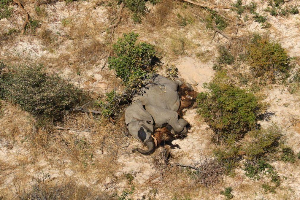 Novo vírus ou veneno são hipótese de causa da morte de centenas de elefantes no Botsuana