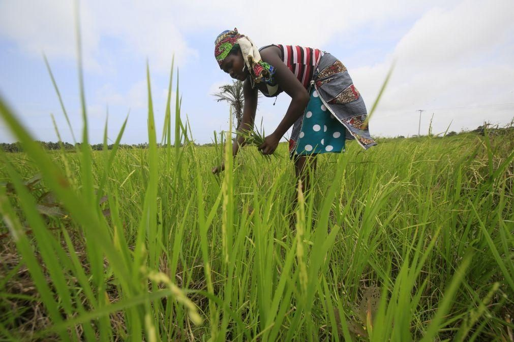 Covid-19: Governo angolano aprova financiamento de 34 milhões de euros para compra de fertilizantes