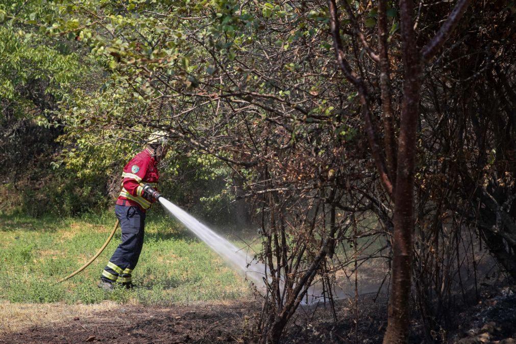 Incêndios: Pequenos agricultores da Sertã com prejuízos de pelo menos 2ME