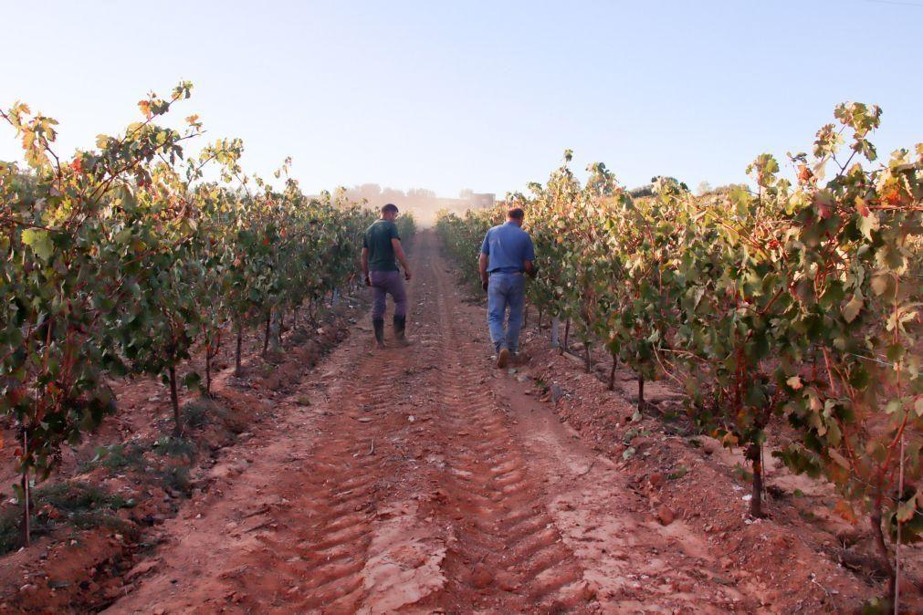Produção de vinho em Portugal deverá cair 3% face à campanha anterior