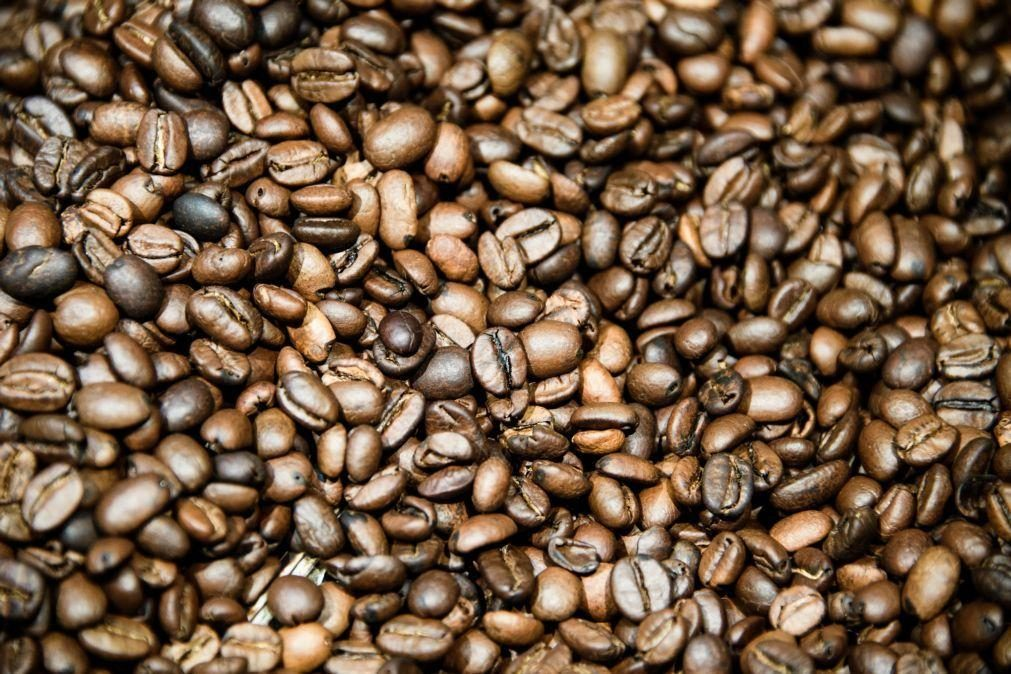 Café orgânico de Timor-Leste à conquista de mercados de Macau e da China