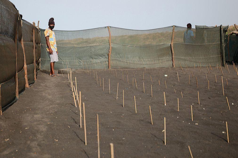 Carreta-Carreta, nove anos de amor às tartarugas em Cabo Verde mas sem grandes apoios