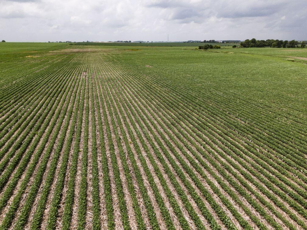 Brasil preparado para alimentar parcela do mundo respeitando padrões ambientais - embaixador