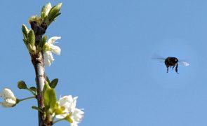 Abate de árvores e queimadas estão a exterminar abelhas em Angola - apicultores