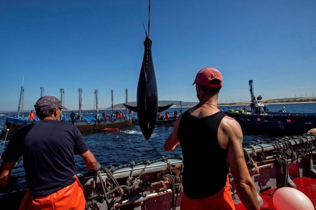 Noruegueses querem produzir atum em aquacultura na ilha cabo-verdiana de São Vicente