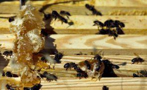 Apicultores de Castelo Branco produziram 38 toneladas de mel na campanha de 2020