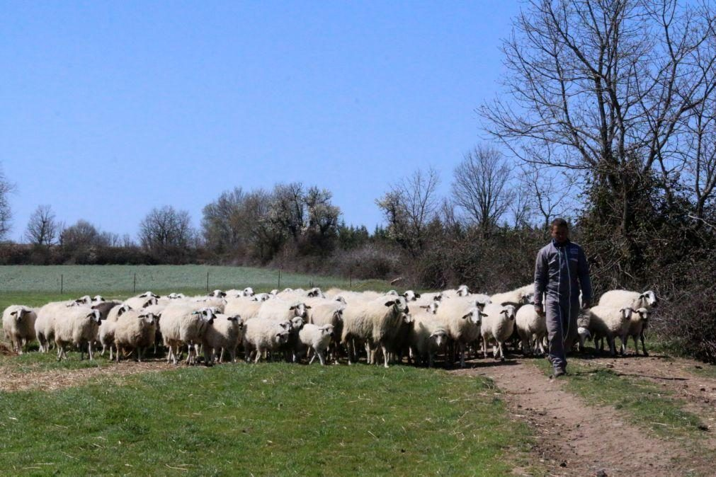 Município de Mêda atribui apoios à produção de ovinos, caprinos e bovinos