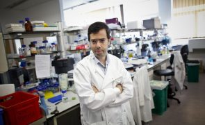 Cientistas portugueses descobrem potencial de proteção contra a sépsis em antibióticos