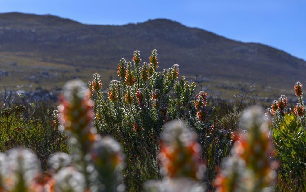 Plantas interrompem crescimento quando percebem que há pouca água, diz estudo