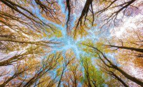 Meteorologia: Previsão do tempo para sexta-feira, 30 de outubro
